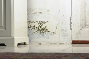 Mold testing and inspection services from Philadelphia's experts